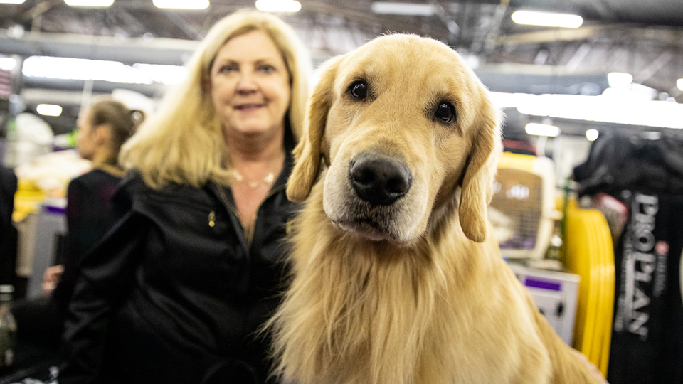 Westminster Kennel Club Dog Show - 2 Day Pass at Madison Square Garden